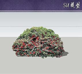 火棘大灌木su模型