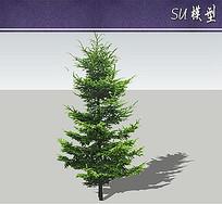 杉木su模型
