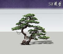 五针松SU模型