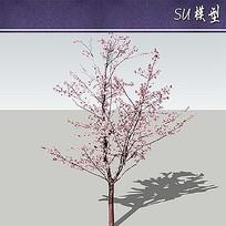 紫叶桃植物SU模型