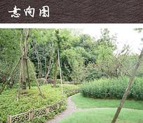 公园植物绿化