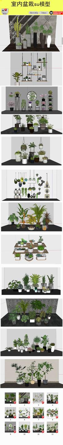 盆栽植物SU模型