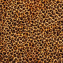 豹纹背景图 JPG