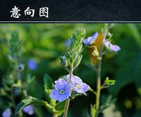 小清新蓝色花朵