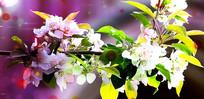 樱花唯美音乐背景视频