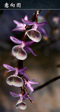 紫色喇叭花图