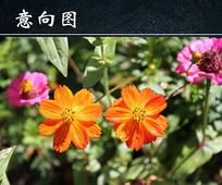 橙色植物花朵图