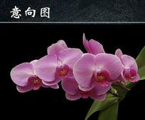 蝴蝶兰花卉微距特写