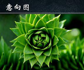绿色多肉植物
