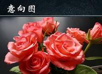 玫瑰花朵高清特写
