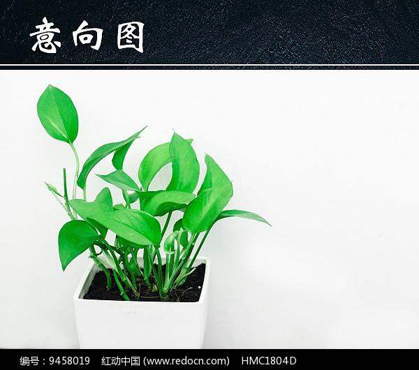 清新绿色植物盆栽图片