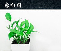 清新绿色植物盆栽