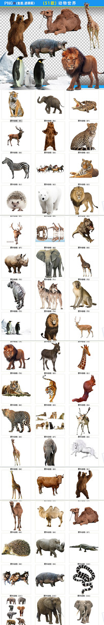 各种动物png素材