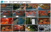 京都西郊岚山枫叶开满红叶实拍
