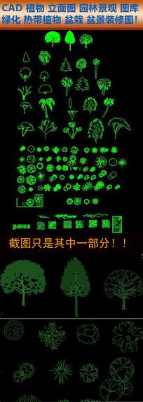 CAD植物立面图园林景观绿化