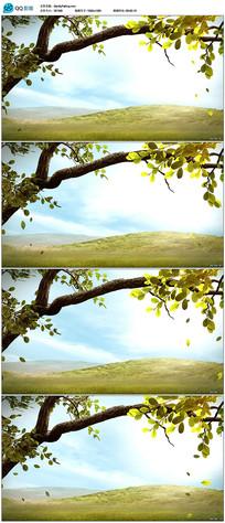 唯美树叶树枝背景