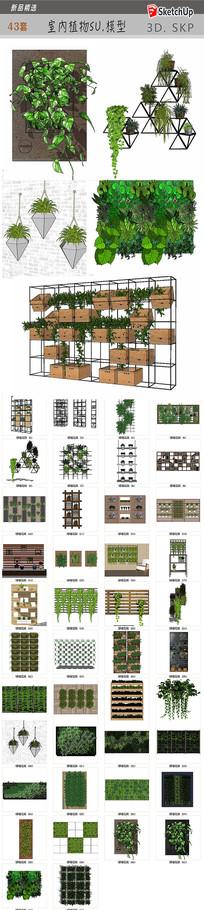 室内植物SU模型 skp