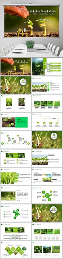 敬畏生命植物成长树苗PPT
