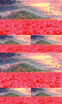 山花烂漫浪漫背景视频