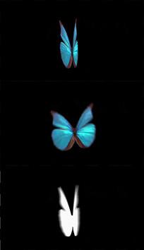 4K一只蓝色蝴蝶视频素材