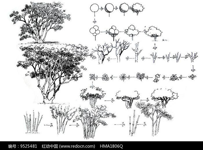 大乔木步骤分析手绘线稿图片