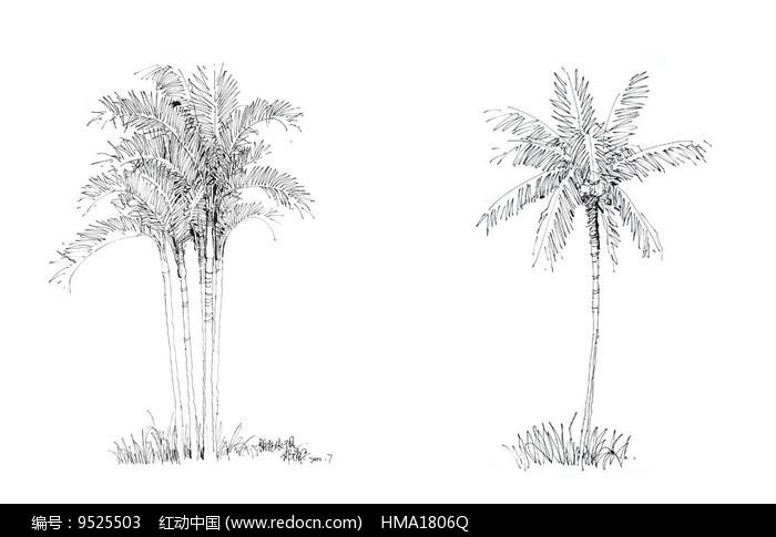 棕榈树手绘线稿
