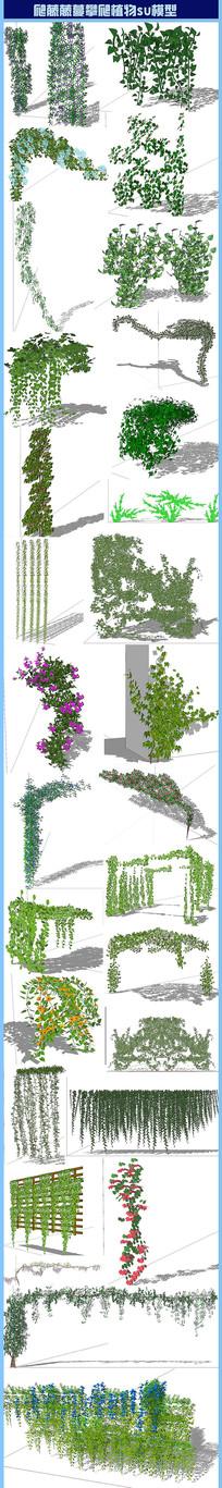 爬藤藤蔓攀爬植物su模型