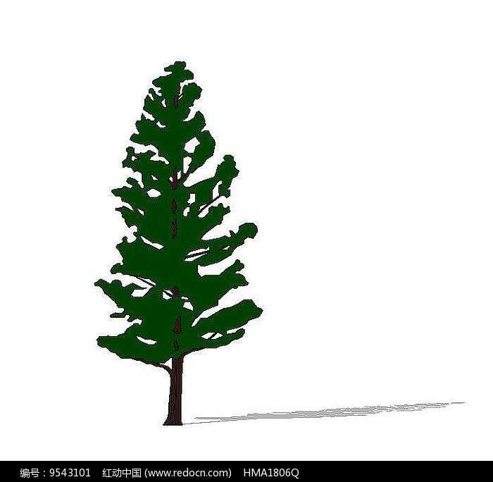 大松树2D图片
