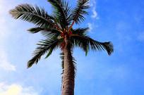 蓝天下绿色棕榈树