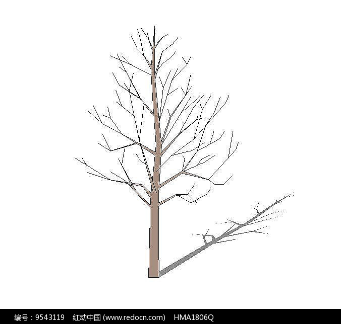 秋季枯树图片