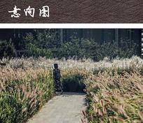生态公园植物景观