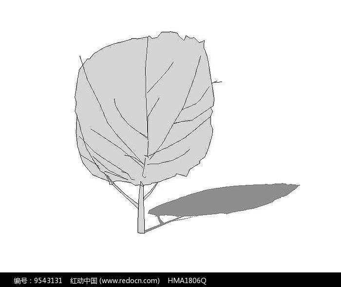 su无色树木图片