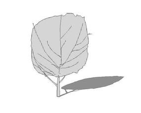 su无色树木