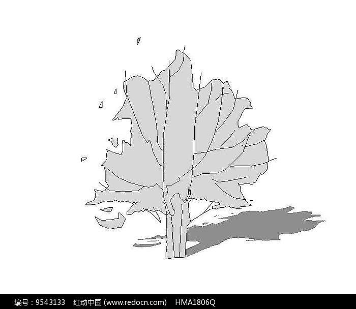 无色植物su图片