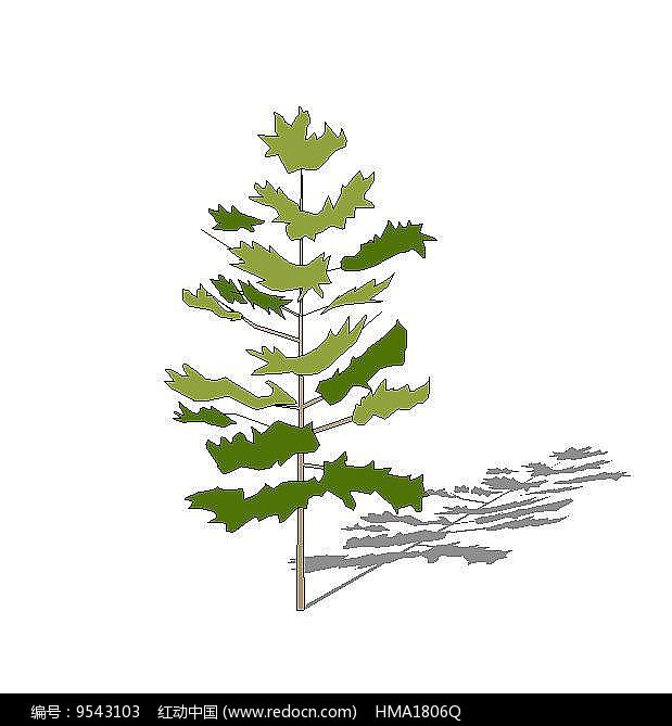 樟树2D图片