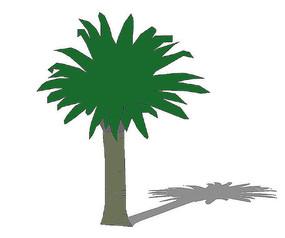 棕榈树2D