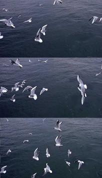 海上飞舞的海鸟实拍视频素材