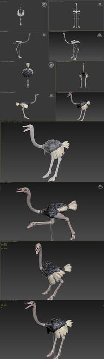 驼鸟3种姿态蒙皮