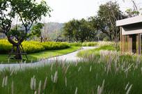 公园绿地景观效果图