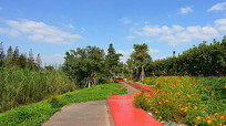 花卉公园游步道景观