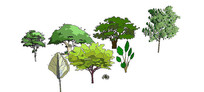 2d手绘植物