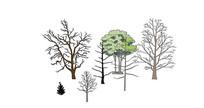 冬景树枯树 skp