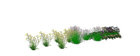 花卉植物群