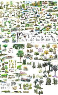 园林绿化植物素材