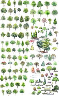 园林树木植物素材