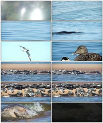 海洋动物世界实拍视频