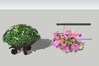 室内外装饰盆栽植物