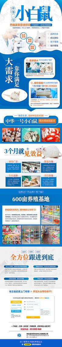 淘宝天猫小白鼠招商详情页设计