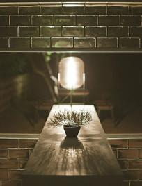 灯光下的一盆植物
