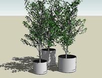 组合绿植盆栽